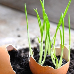 You can use an old egg shell to start a seedling.
