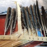Feathers are not only necessary for birds to fly, but also control their body temperature. Vets were able to attach 6 new feathers using a technique known as