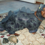 Dachshunds are one of the most popular breeds in America.