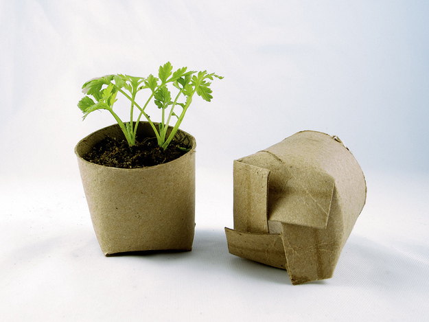 Make a nice biodegradable planter out of old toilet paper rolls.