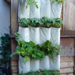 You can use a shoe rack to make a hanging garden.