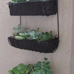You can use shower caddies to make hanging gardens.