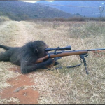 This baboon knows his rights.