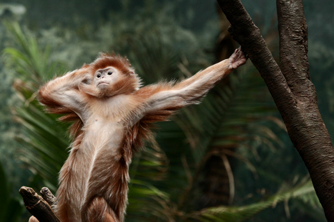 This monkey knows how to strike a pose.
