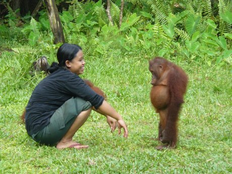 This orangutan needs a pep talk.