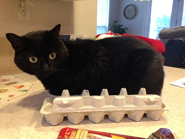 Do cats lay eggs? Because this would be purrrrfect.