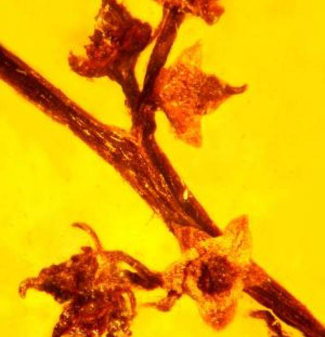 100-Million-Year-Old Plant Sex