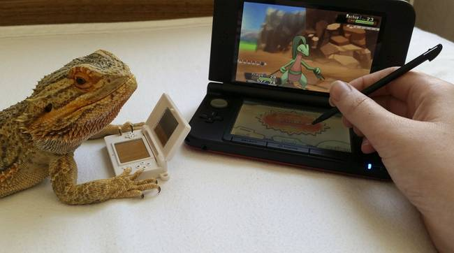 Playing Pokemon with his owner.