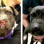 How could anyone let that happen to a dog?