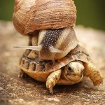 This snail decided to catch a ride on his slighter speedier buddy.