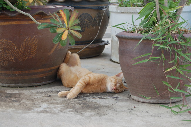 Attacking and eating plants can be so tiring.