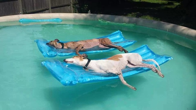 Dog days of summer, indeed.