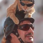 You (and your cat) may look and act tough...but you still have a cat on your head.