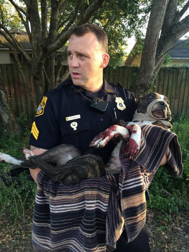 Senior Sergeant R. Mills carried the pup away from the tracks. She was quickly delivered to Tampa Bay Veterinary Emergency Service.