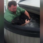 He was going to run a hot bath for the calf, but when he saw the hot tub bubbling and ready to go...