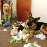 After destroying their own toys, they found more in the kids
