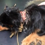 The rope was so embedded into the dog