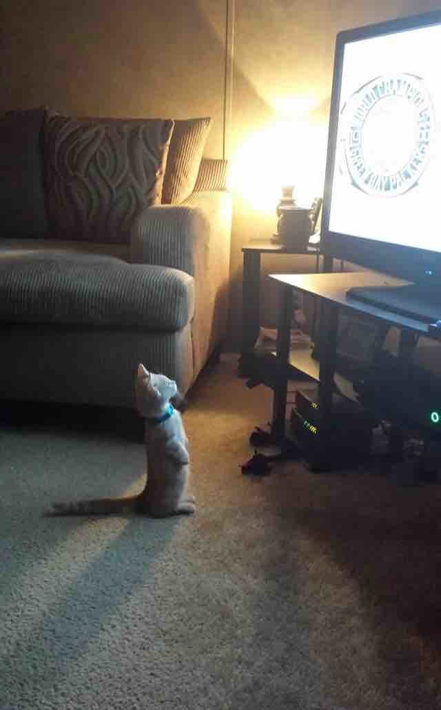 "This cat is seven episodes deep into ""Orange is the New Black"" and doesn"