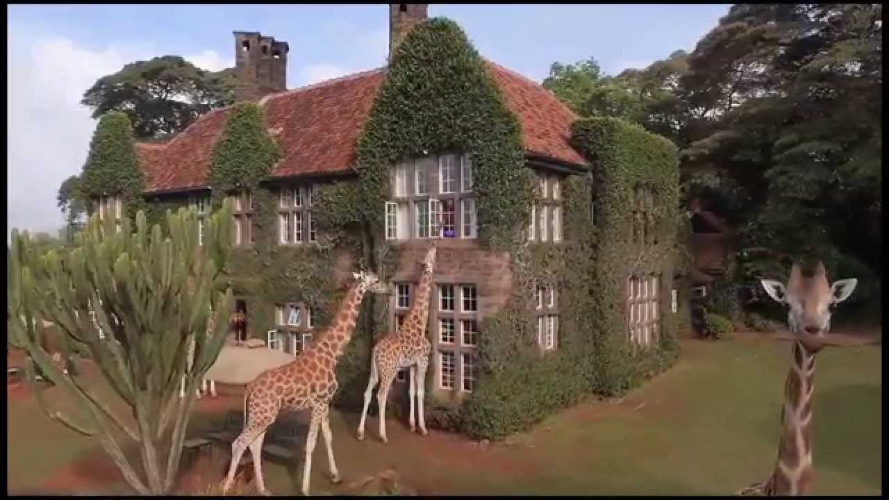 Giraffe are free to roam the manor as they please.