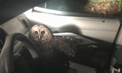 Owl Attacked Cop papersnack.com