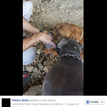 Dog-found-buried-alive-in-France-triggers-online-fury-petition-for-owner%E2%80%99s-%E2%80%98maximum-sentence%E2%80%99-%E2%80%94-RT-News3
