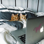 Petflix and Purr