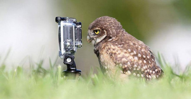 Owl staring at a go pro papersnack.com