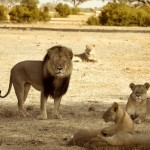 cecil-lion-illegal-hunting-internet-backlash-walter-palmer-zimbabwe-4-e1438176878310