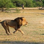 cecil-lion-illegal-hunting-internet-backlash-walter-palmer-zimbabwe-5-e1438176574897