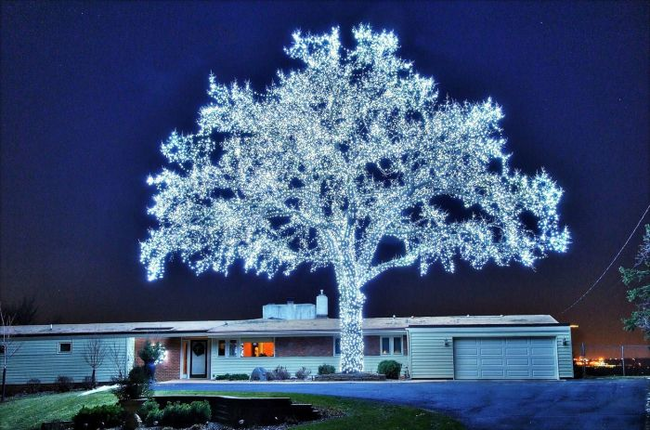 A tree decorated with 40,000 LED lights.