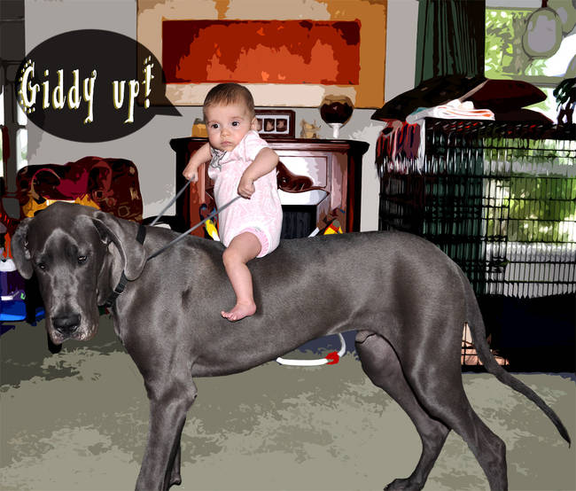 9.) If you are a tiny baby, you can even ride a Great Dane!