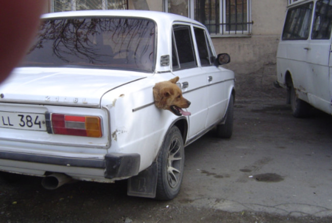 This car is powered by dog!