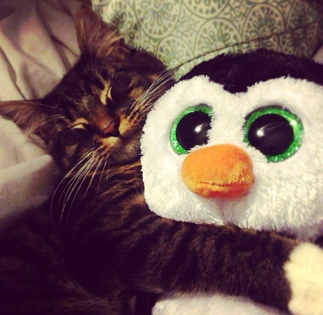 Whoever said birds and felines couldn