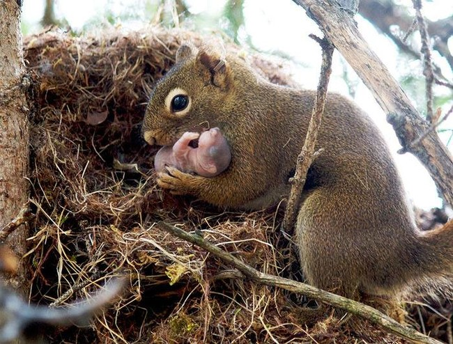 But...squirrels are already so small!
