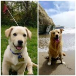 before and after puppy papersnack.com