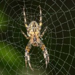 10-myths-youve-probably-heard-about-spiders-1