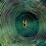 10-myths-youve-probably-heard-about-spiders-3