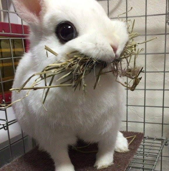 That's not the proper way to eat hay..