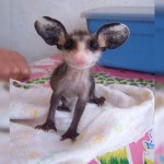 This is a baby possum