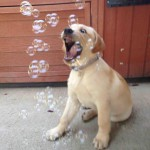 introduce Charli to bubbles
