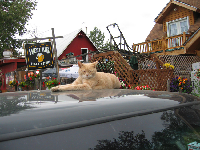 This cat named Mayor Stubbs was actually elected mayor of Talkeetna, Alaska for the past 17 years.