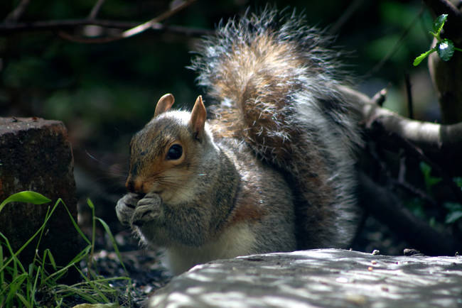 Squirrels will adopt orphaned baby squirrels into their own families.