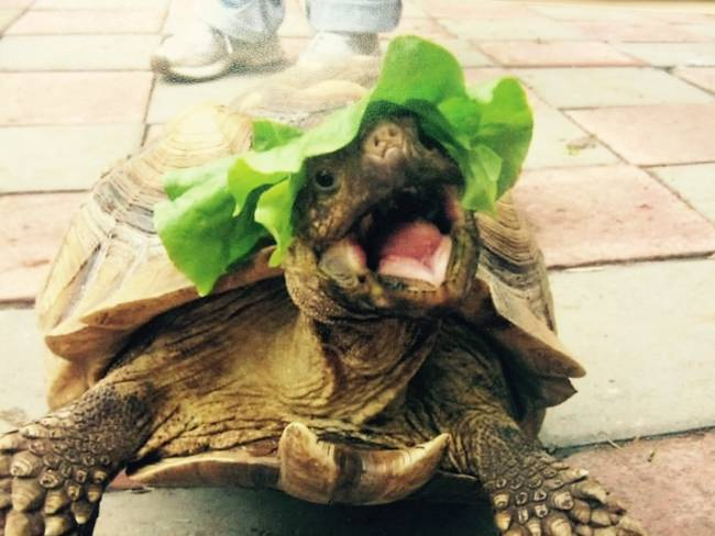 """""""Haha! I put the lettuce on my head! Instead of in my mouth! D"""