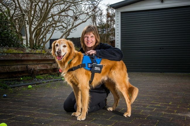 Epilepsy dogs make it possible for those who suffer from seizures to live a functional life.