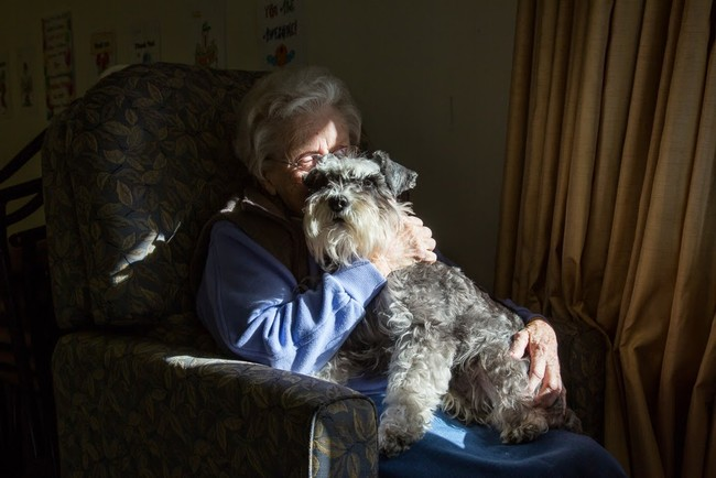 Comfort dogs vastly improve the emotional quality of the lives of the sick and elderly.