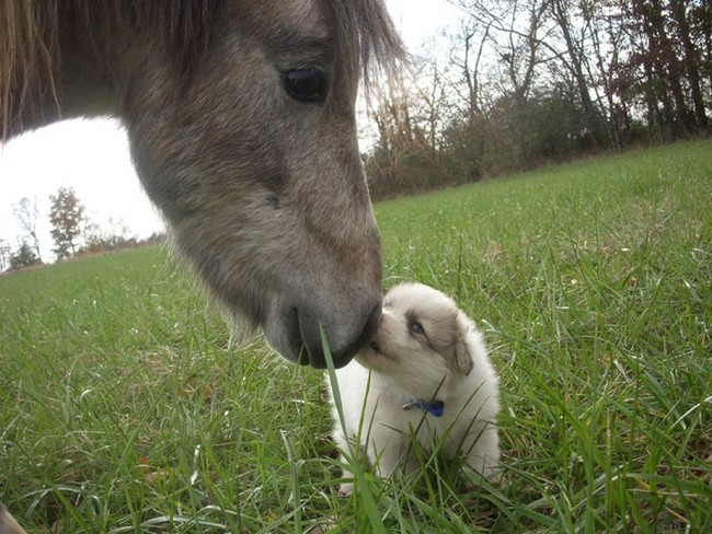 """Thank you, tiny horse."" ""You"