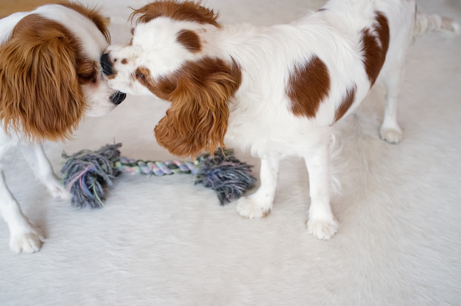 Sharing a toy and a smooch.
