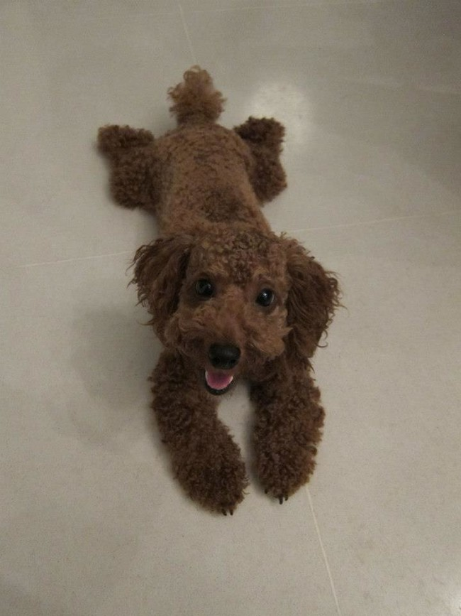 This pup was purchased at a local Build-A-Bear.