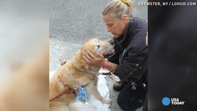 He kept trying to edge toward her despite his own injury, looking to make sure that he saved his owner.