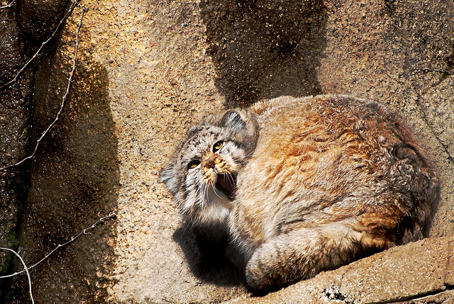 This kitty woke up on the wrong side of the rock.